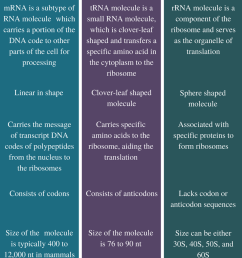 difference between mrna trna and rrna comparison summary [ 799 x 1061 Pixel ]