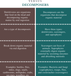 difference between detritivores and decomposers [ 799 x 993 Pixel ]