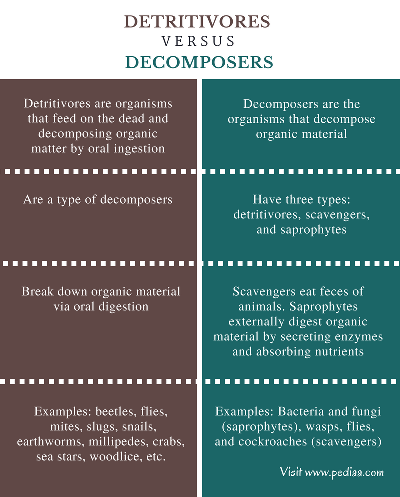 hight resolution of difference between detritivores and decomposers