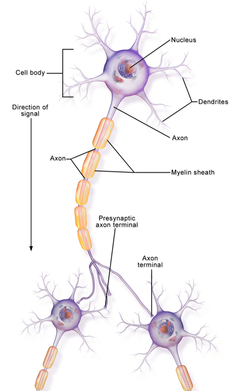a typical illustration of neuronal communication