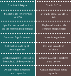 difference between bacteria and fungi [ 799 x 1939 Pixel ]