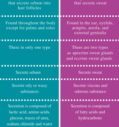 difference between sebaceous glands and sweat glands [ 799 x 1329 Pixel ]