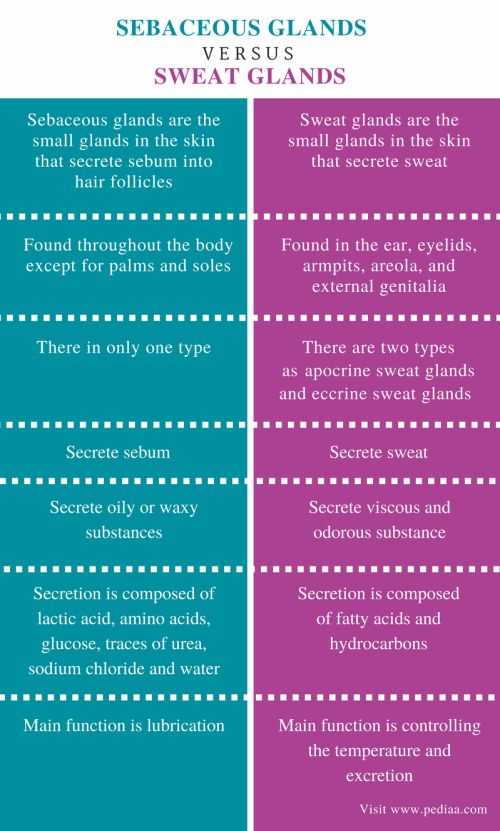 small resolution of difference between sebaceous glands and sweat glands