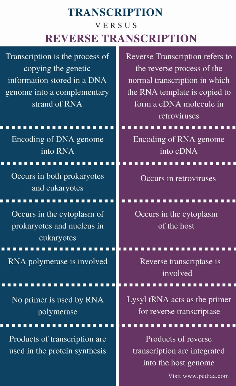 venn diagram dna and rna 84 fiero wiring difference between transcription reverse | definition, mechanism, significance ...
