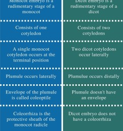difference between monocot and dicot embryo comparison summary [ 799 x 1245 Pixel ]