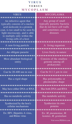 Difference Between Virus and Mycoplasma  PediaaCom