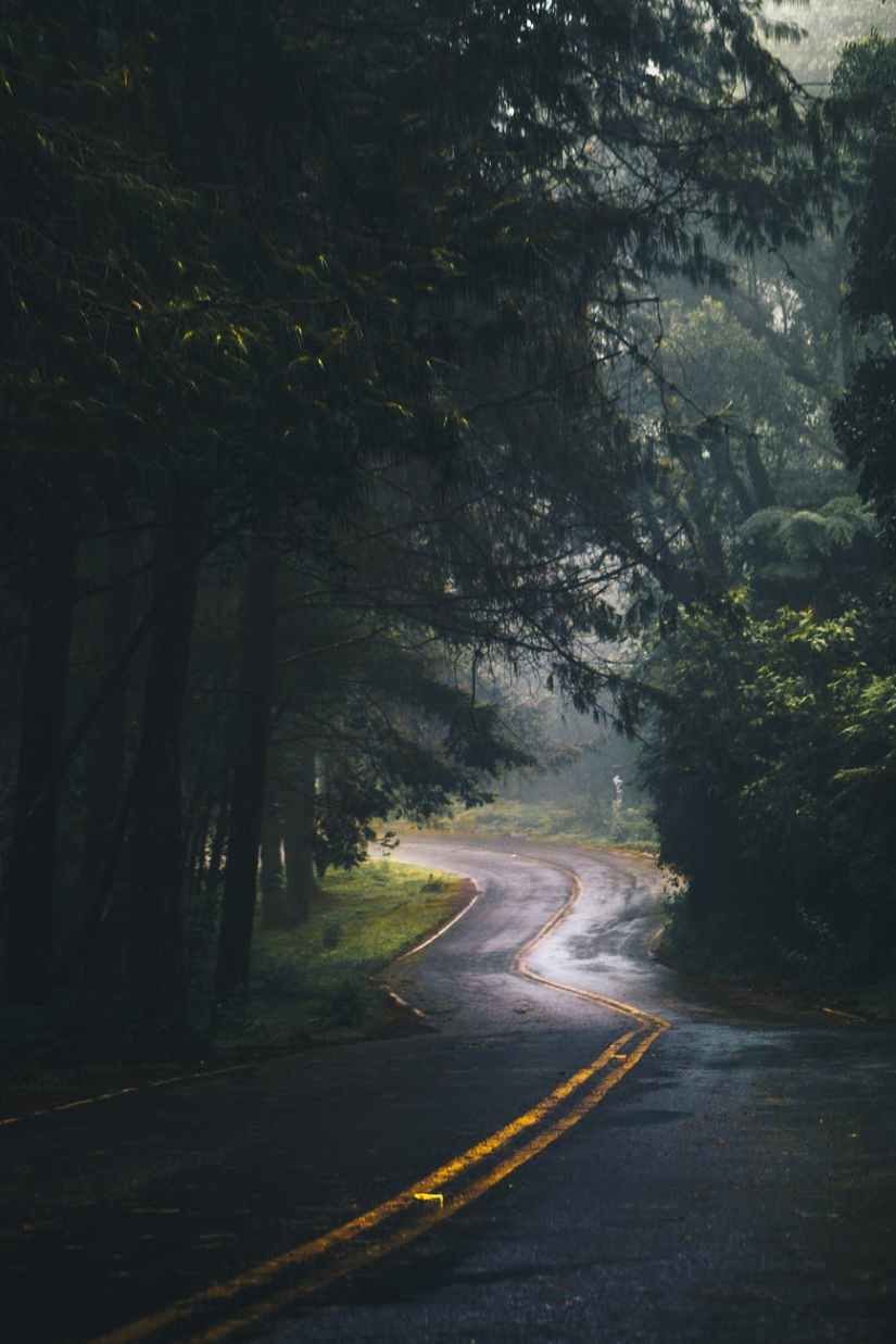 landscape photography of road and forest