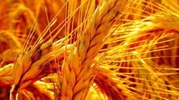 Más de 320 mil toneladas de trigo ingresaron al país desde enero - Más de 320 mil toneladas de trigo ingresaron al país desde enero