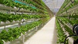 700 millones de personas se alimentan con agricultura urbana - 700 millones de personas se alimentan con agricultura urbana