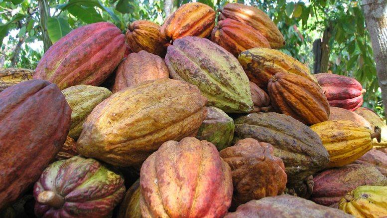 Cacao y madera venezolana partieron a Japón China y República Dominicana - Cacao y madera venezolana partieron a Japón, China y República Dominicana