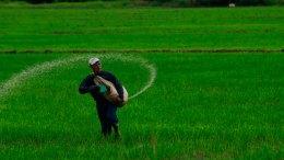 Venezuela siembra arroz con tecnología vietnamita - Venezuela siembra arroz con tecnología vietnamita