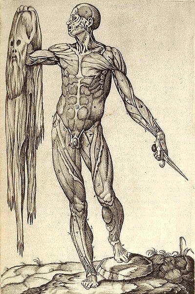 399px-Anatomia_del_corpo_humano