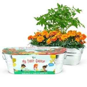 BUZZY Kids Windowsill Grow Kit