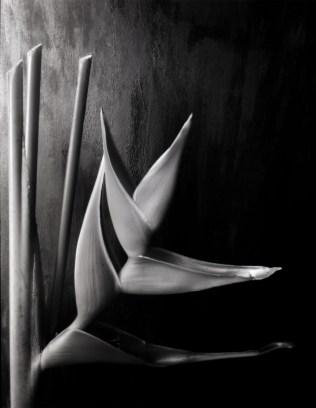 paradise flower by Ale Paulin