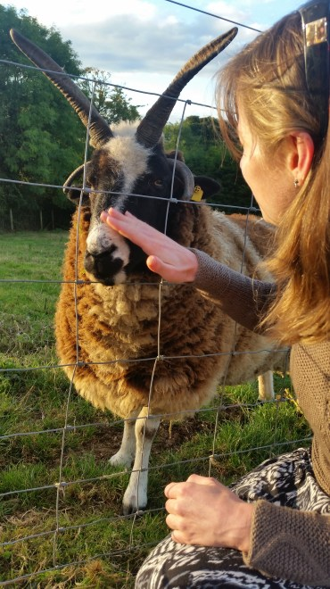 Making friends with the local sheep