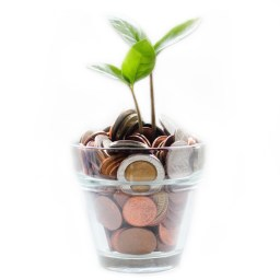 Plant in Coins - Micheile Henderson