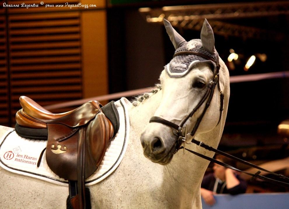 Salon du cheval gucci paris masters grand prix gucci - Salon du master paris ...