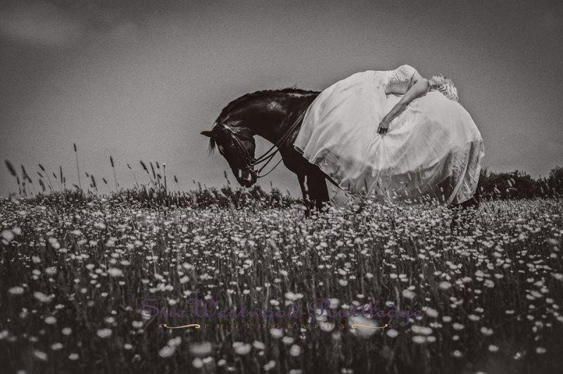 Equine Photography : Sue Westwood-Ruttledge