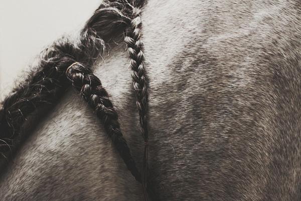 Equestrian Photographer : Michelle Lartigue