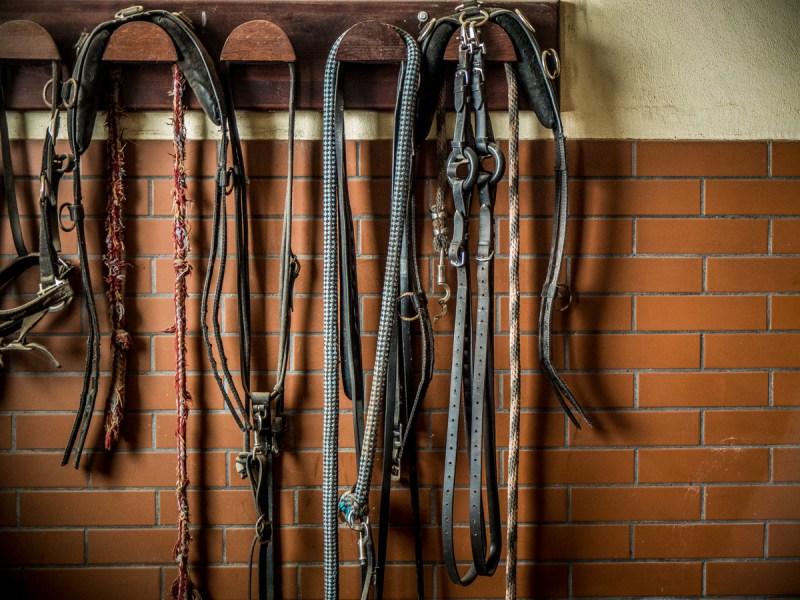 bagienec-stables-10