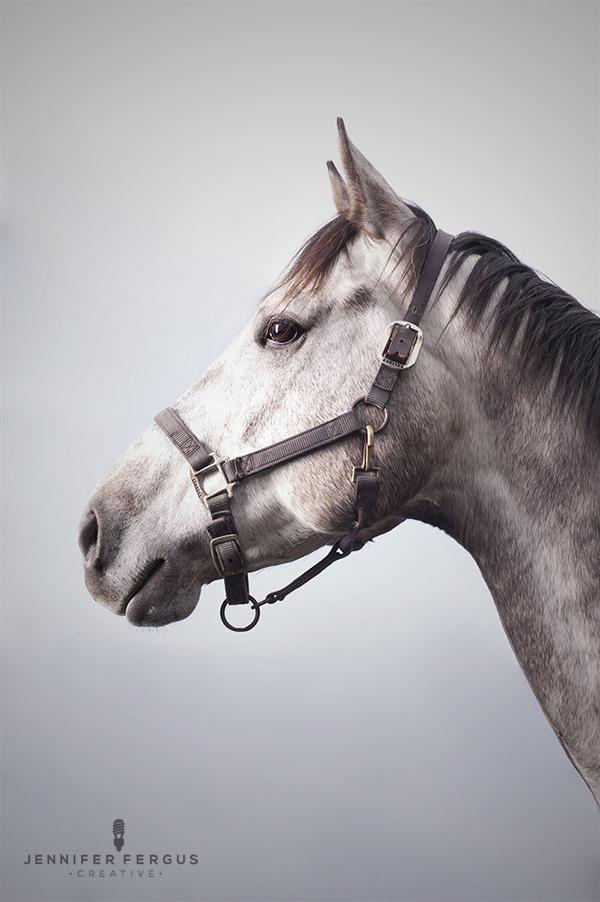 www.pegasebuzz.com | Equestrian photography : Jennifer Fergus