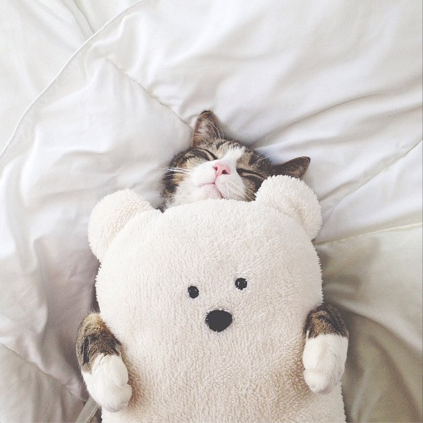 www.pegasebuzz.com | Cat and Teddy Bear