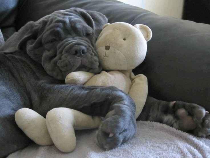 www.pegasebuzz.com | Dog and Teddy Bear