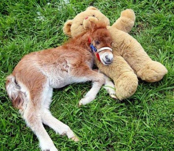 www.pegasebuzz.com | Horse and Teddy Bear