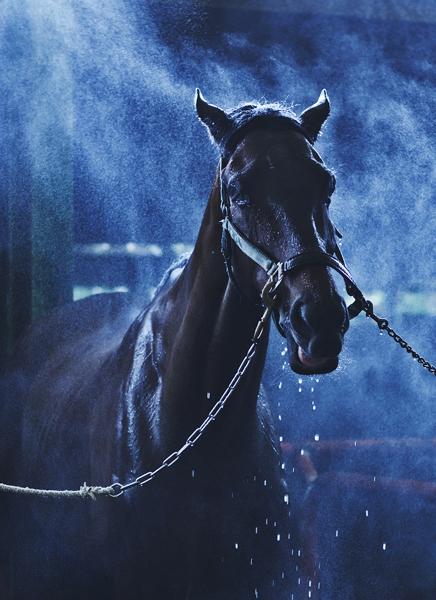 www.pegasebuzz.com | Equestrian Photography : Aihciy Hsu