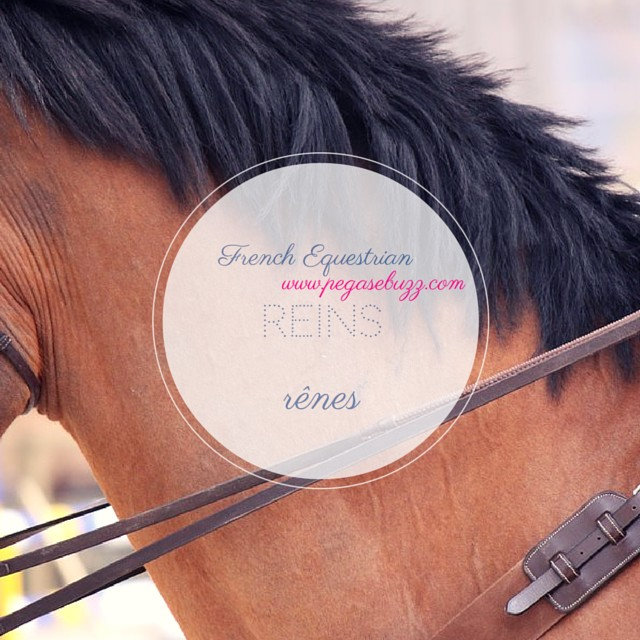 www.pegasebuzz.com | French Equestrian by Roxanne Legendre