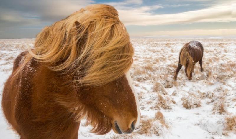 www.pegasebuzz.com | Equestrian photography : Pepe Soho.