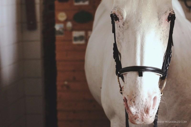 www.pegasebuzz.com | Soin : Uvelios, la crème solaire pour le cheval