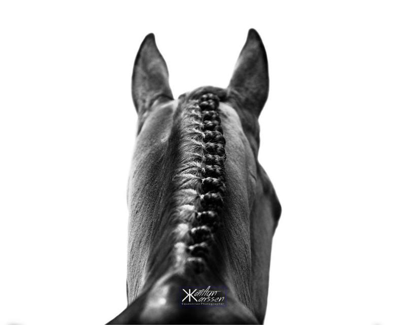 www.pegasebuzz.com | Equestrian photography : Kaitlyn Karssen.
