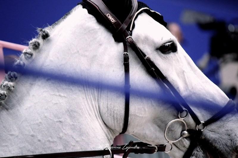 www.pegasebuzz.com | Equestrian photography : Roxanne Legendre - Saut Hermès 2017.