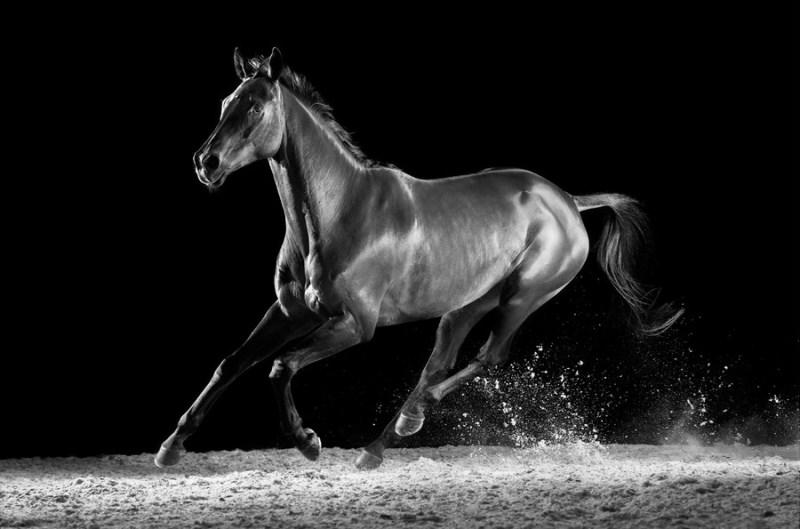 www.pegasebuzz.com   Equestrian photography : Mark Harvey - Horses.
