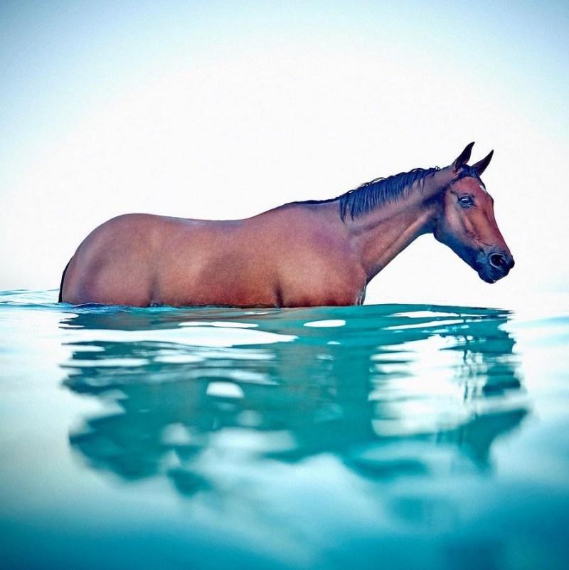 www.pegasebuzz.com | Equestrian photography : Sam Bisso.
