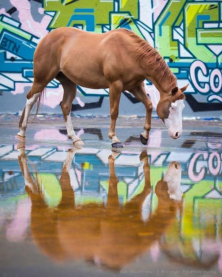 www.pegasebuzz.com | Equestrian photography : Lisa Mughrasi - Horse Graffiti.