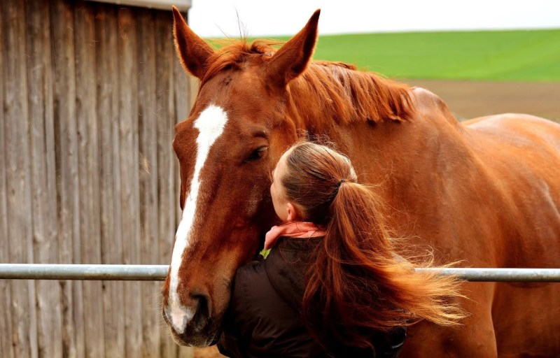 www.pegasebuzz.com | Bien-Être : Cavalassur, assurance du cheval
