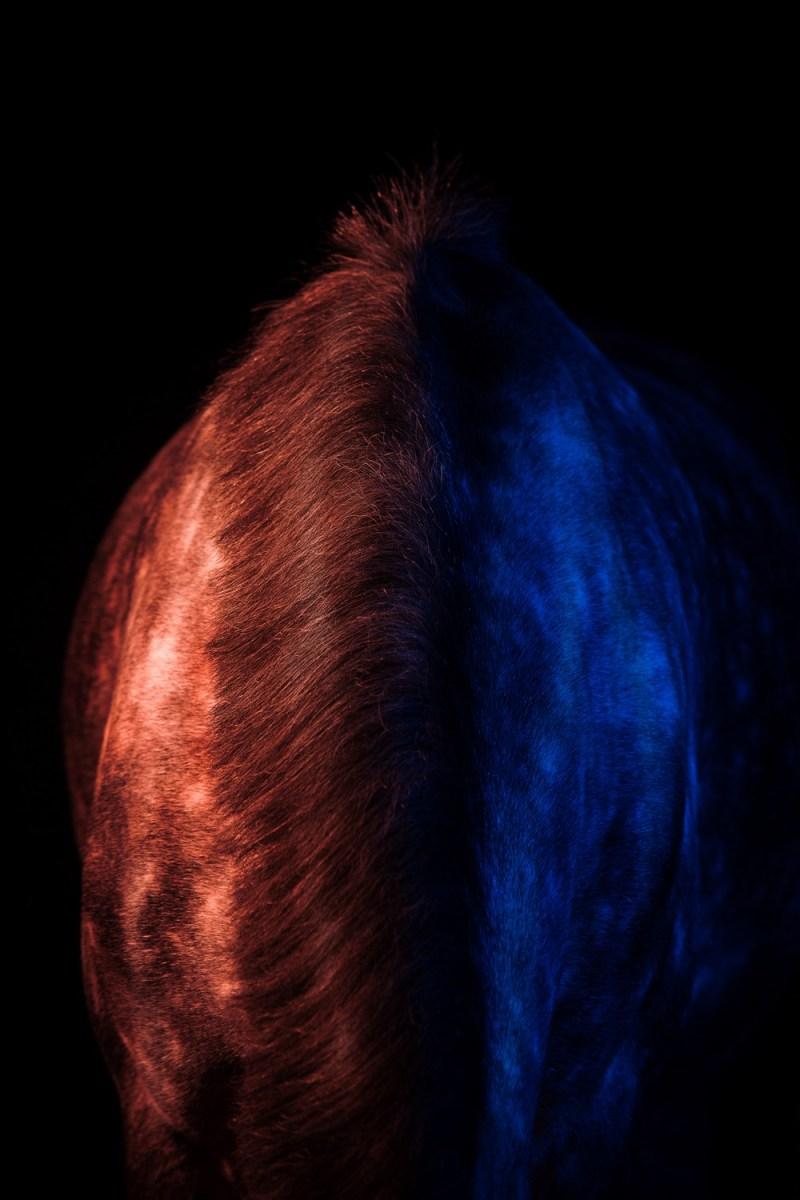 www.pegasebuzz.com | Equestrian photography : Diana Wahl : Colour horses.