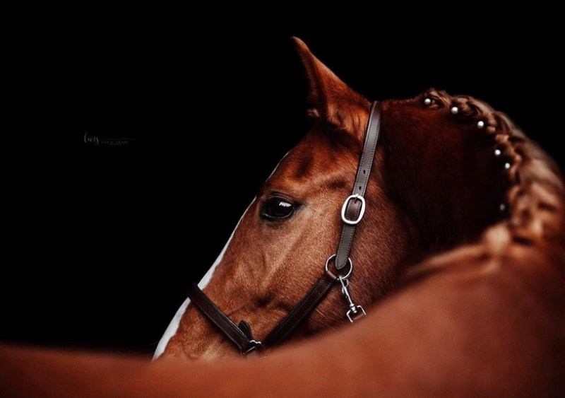 www.pegasebuzz.com | Equestrian photography : Lisa Seibel Fotografie - Luxury Manes.