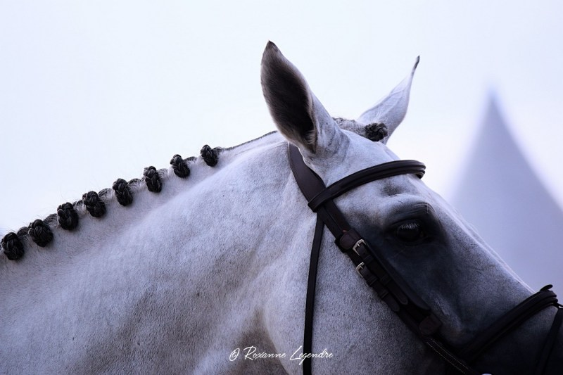 www.pegasebuzz.com | Roxanne Legendre - Global Champions Tour Chantilly 2019.