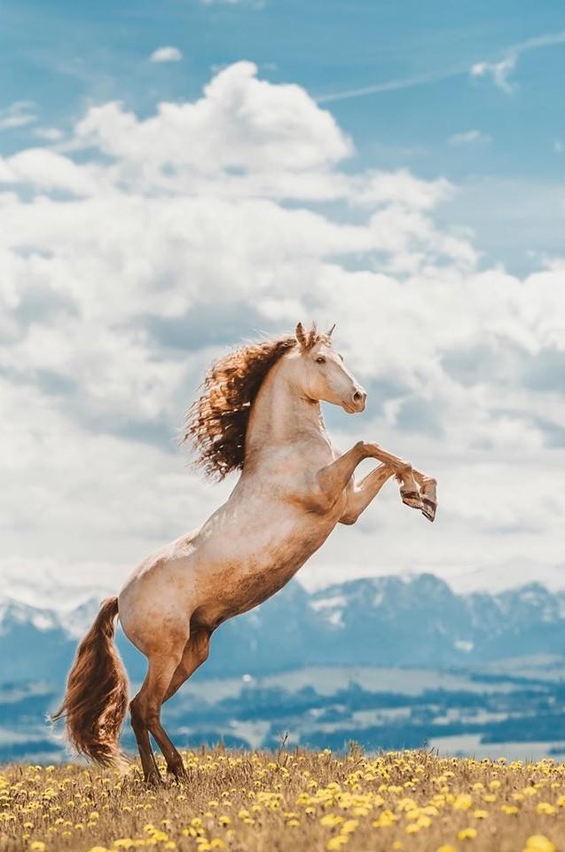 www.pegasebuzz.com | Equestrian photography : Isabel Brune.