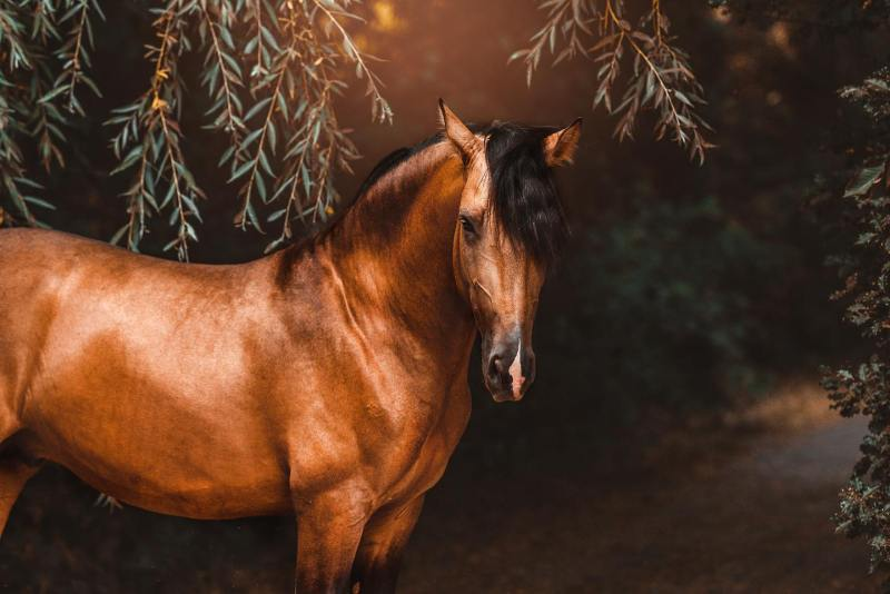 www.pegasebuzz.com | Equestrian photography : Isabel Brune.