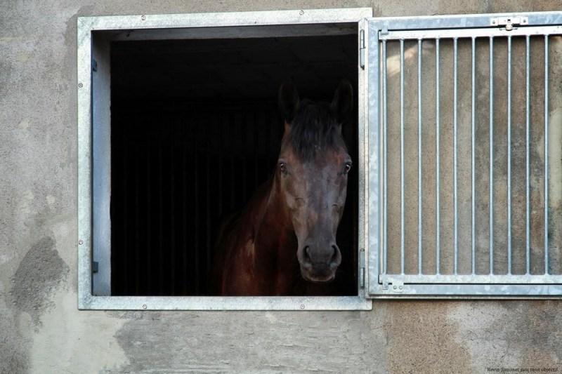 pegasebuzz-covid-19-ecurie-du-chevaux-de-sport-ethique-equitation-durable-01