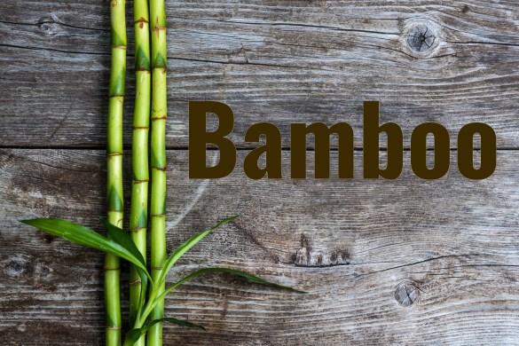 Bamboo_561847804 (1)