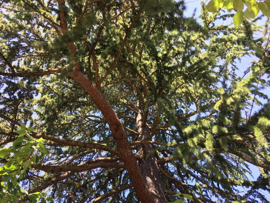 Tree Star Thanks