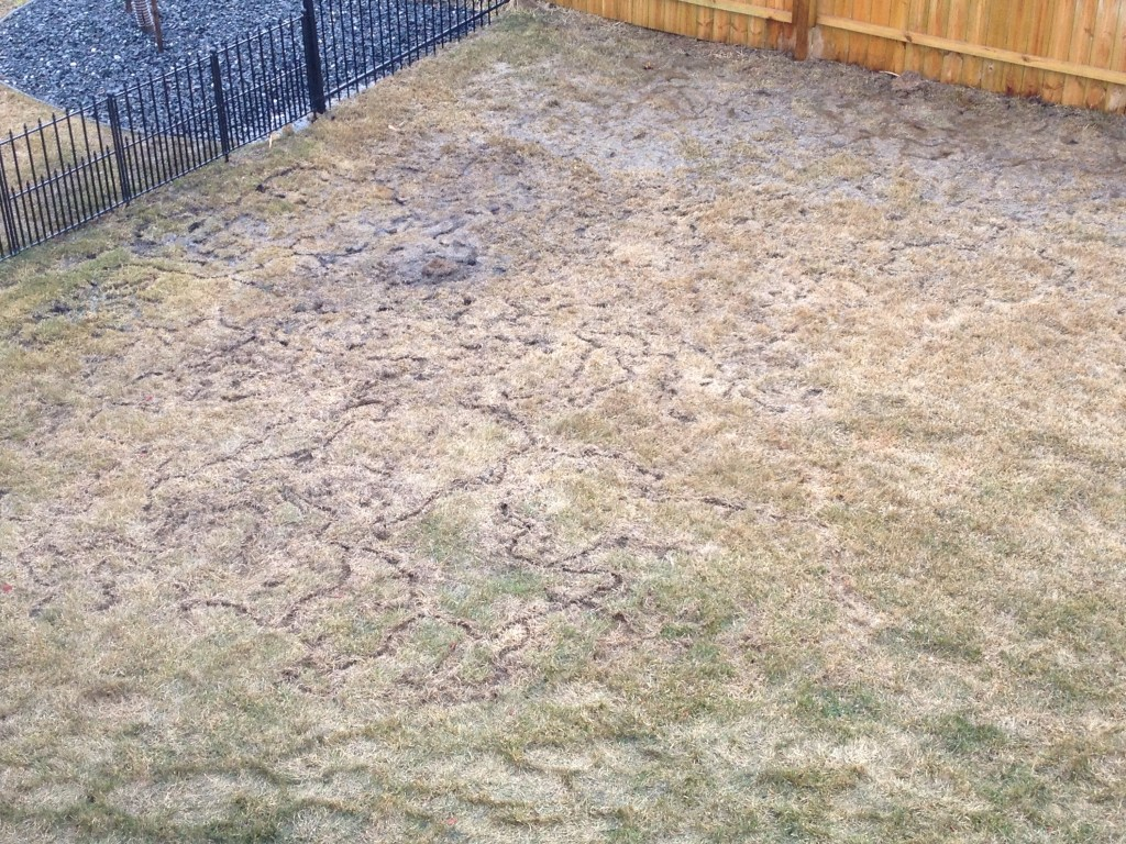 vole damage backyard