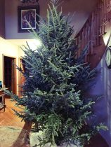 Christmas Tree – 2017