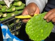 10.6 scraping cactus