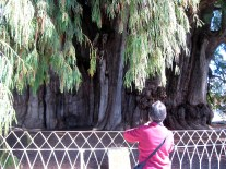 9.2. Big tree with red shirt woman